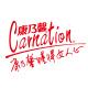 carnation康乃馨