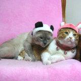 阿尔卡特朗玛专卖店 好产品吸引人 - ermimi0000 - 萌猫家园--爱多多